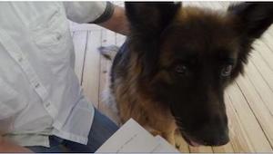 Zaledwie 2 tygodnie po adoptowaniu psa, chciał go oddać, ale TEN list zmienił ws