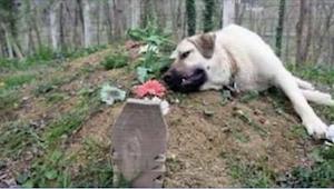To najwierniejszy pies na świecie! Od śmierci swojego pana codziennie przychodzi