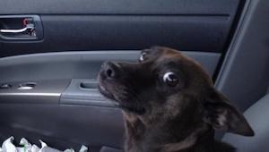 Tych 17 psów poznało straszliwą prawdę. Ich reakcja jest bezcenna.