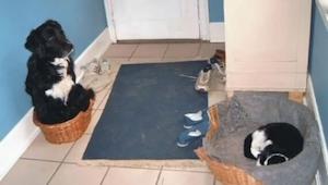 15 kotów, które zawłaszczyły sobie psie legowiska i nie mają zamiaru ich oddać.