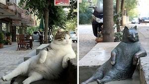 Ten kot jest bohaterem wielu memów. Dziś w jego ulubionym miejscu stanął upamięt