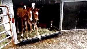 Trudno uwierzyć, że hodowla koni ma tak brzydki sekret. Gdyby nie tak kobieta 7