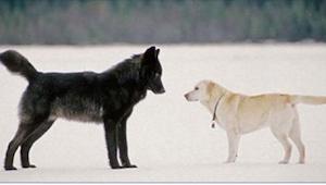 Spacerował z psem po lesie, gdy nagle zza drzew wybiegł wilk. To, co stało się p