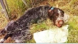 Pies został okaleczony i porzucony, ale tylko zobaczcie, co się dzieje, gdy przy