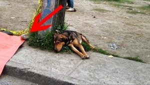 Gdy zrozumiesz, na co patrzy ten smutny pies, Tobie też będzie się chciało płaka