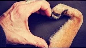 Czy pies może nas czegoś nauczyć? Oczywiście, że tak! Oto 7 najważniejszych rzec
