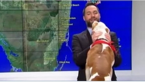Gdy w czasie programu na żywo podbiegł do niego obcy pies, wiedział, jak zareago