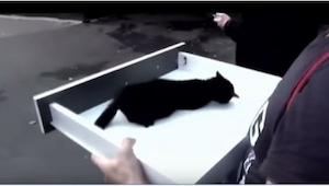 Ten kotek dosłownie płakał z bólu umierając na rosyjskiej ulicy. Na szczęście kt