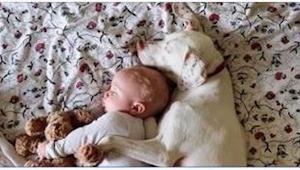 Gdy przygarnęli bitego psa, nie sądzili, że tak to się skończy!