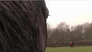 Te 3 konie wychowały się razem, ale potem jeden z nich musiał zostać sprzedany.
