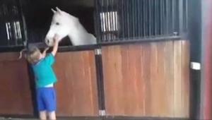 Ten chłopiec po prostu zasłużył sobie na wymarzonego konia. Zobaczcie, co zrobił