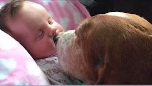 Ich córeczka umierała. To, co zrobiły ich psy, zaskoczyło całą rodzinę.