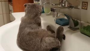 Kot siedzi w zlewie, a to co zaraz zrobi poprawi humor każdemu!