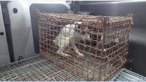 Pies był zamknięty w klatce przez wiele lat. Nawet nie mógł się wyprostować! Za
