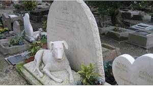 Zgodnie z prawem, pies może zostać pochowany z właścicielem, ale pod jednym waru