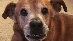 Gdy przygarnęli psa, który spędził 17 lat w schronisku, jego reakcja była bezcen