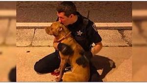 Gdy policjant zobaczył na ulicy dwa przerażone psy, nie wahał się i od razu pods