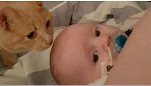 Gdy nikt nie patrzy, kot zakrada się do chorego dziecka. To, co potem się dzieje
