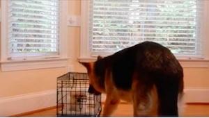 Bała się, że jej owczarek zrobi krzywdę szczeniaczkowi... Zobaczcie, co nagrała