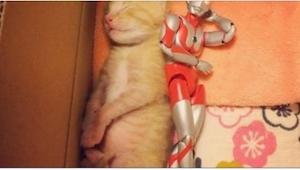 Ten kotek miał umrzeć, ale wtedy dostał zabawkę... To, co dzieje się potem, zach