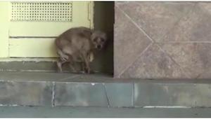 Przerażona sunia trzęsie się ze strachu na progu domu. 30 minut później jej życi