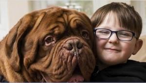 Pies zawsze chodził po prawej stronie chłopca. Gdy rodzice dowiedzieli się dlacz