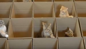 Gdy koty zbliżyły się do kartonów, już nic nie było w stanie ich odgonić! Ich re