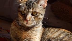 Przygarniając kota, nie wiedzieli, że będą mu zawdzięczać życie! A wszystko prze