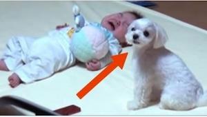 Matka położyła bobasa obok psa. To, co nagrała, sprawiło, że nie tylko dziecku o