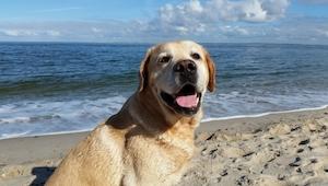 10 rzeczy, których nigdy nie powinieneś robić swojemu psu.