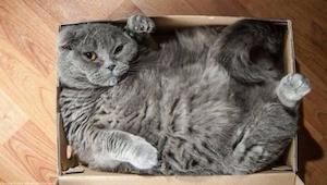 Te koty nic sobie nie robią z faktu, że pudełka są dla nich za małe. Płaczę ze ś