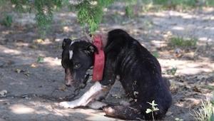 Myśleli, że ten pies nie żyje, to co znaleźli przekroczyło ich najgorsze obawy!