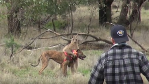 To co zrobił pewien mężczyzna by uratować psa jest naprawdę niezwykłe..