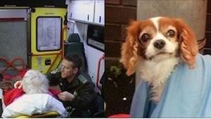 Mężczyzna wylądował w szpitalu, zobacz co zrobił jego pies! Wzruszające!