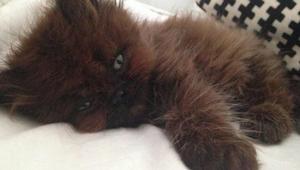 Kobieta adoptowała chorowitego kociaka. Rok później nie mogła uwierzyć własnym o