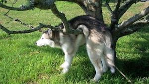 Żal wam biedaka, który zawisł na drzewie? Zobaczcie co wywinęła reszta tych psów