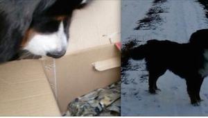 Jej pies zaczął kopać w śniegu, to co z niego wyciągnął szokuje!