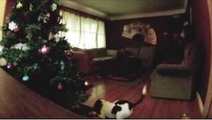 W tym roku pies został sam w domu... To najzabawniejsze nagranie, jakie zobaczyc