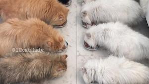 Te koty mają już ponad 285tys fanów na instagramie - zobacz dlaczego!