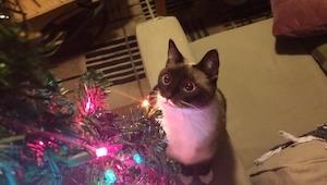 12 zwierzaków, które już nie mogą doczekać się Świąt. Nas najbardziej rozbawił n