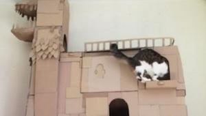 Zobacz co ten mężczyzna zbudował dla swojego kota! Niesamowite!