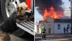 Strażacy gasząc pożar zauważyli psa, który wynosił coś z płonącego domu. Później