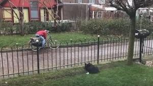 Pies nudził się sam w ogrodzie... Wymyślił więc genialną zabawę! Musicie to zoba