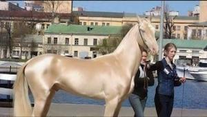 Zdjęcia najpiękniejszego konia na świecie, którym zachwyca się cały świat!