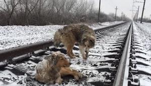Te psy leżały na torach, gdy nadjechał pociąg spodziewałam się najgorszego... Zo