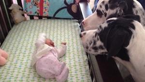 Rodzice na chwilę zostawili dziecko samo z psem. Zobaczcie co zastali gdy wrócil