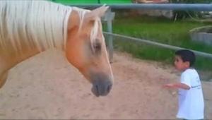 Chłopczyk podszedł niebezpiecznie blisko nogi konia. To co nagrała jego matka je