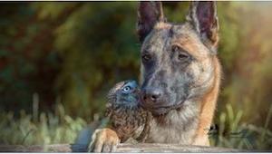 Gdy pies zbliżył się do sowy, zamarłam, ale on wcale nie chciał jej zrobić krzyw