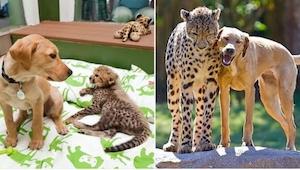 20 zdjęć zwierząt, które razem dorastały i... nic się nie zmieniły pomimo upływu
