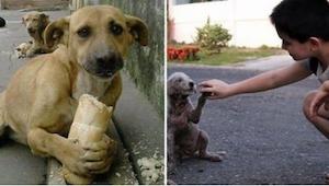 Dziecko karmiło bezpańskiego psa. Widząc to, oburzony przechodzień zatrzymał się
